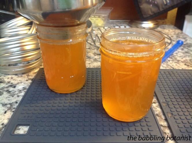marmalade 6 copy