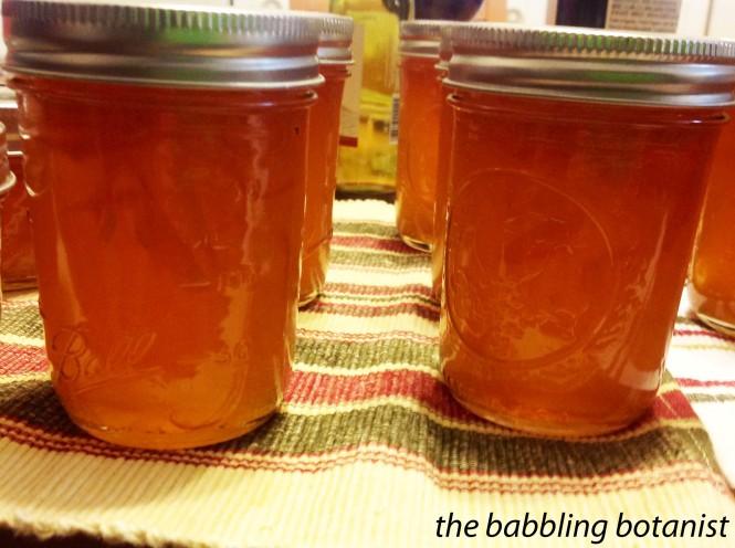 marmalade 7